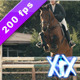 Equestrian - VideoHive Item for Sale