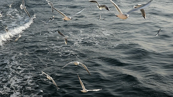 Flight Off The Seagulls 1