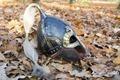 Viking helm - PhotoDune Item for Sale