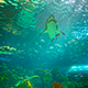 Shark Swimming  - VideoHive Item for Sale