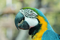 Colorful parrot birds - PhotoDune Item for Sale