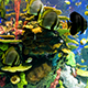 Marine Fish Swimming in the Reef - VideoHive Item for Sale