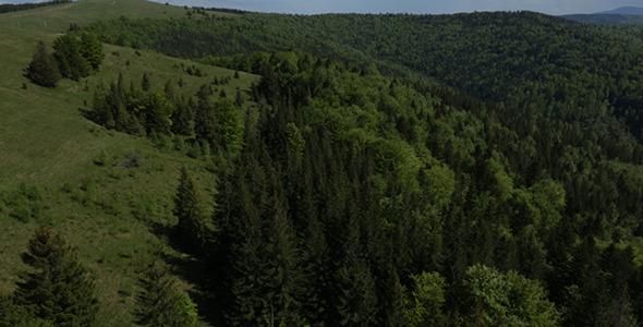 Coniferous Forest 2