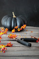 Black colored pumpkin with berries and scissors - PhotoDune Item for Sale