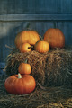 Assortment of pumpkins on hay - PhotoDune Item for Sale