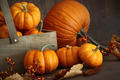 Small pumpkins with wooden box - PhotoDune Item for Sale