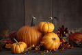 Still life harvest with pumpkins and gourds - PhotoDune Item for Sale