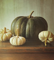 Green pumpkin and small white gourds - PhotoDune Item for Sale