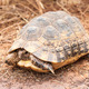 Turtle on the ground - PhotoDune Item for Sale