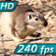 Running Gopher - VideoHive Item for Sale