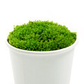 Green moss in the paper grass. - PhotoDune Item for Sale