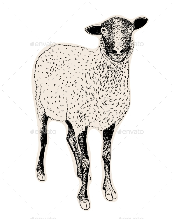 GraphicRiver Hand Drawn Sheep 9558030