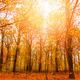 Sunlit autumn forrest - PhotoDune Item for Sale