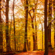 Colourful forest path - PhotoDune Item for Sale