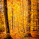 Colourful forest scene - PhotoDune Item for Sale