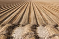 Farm Soil Rows - PhotoDune Item for Sale