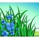 A Garden in the Hill with Blue Flowers - GraphicRiver Item for Sale