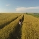 Flying over Girl Running through Wheat Field - VideoHive Item for Sale
