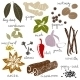 Stylized Spices - GraphicRiver Item for Sale