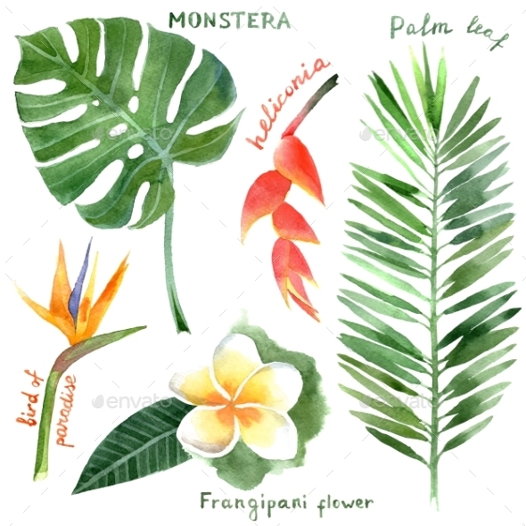 GraphicRiver Tropical Plants 9571702