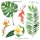Tropical Plants - GraphicRiver Item for Sale