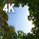 Sky and Clouds in the Forest  - VideoHive Item for Sale