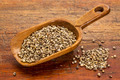 hemp seeds scoop - PhotoDune Item for Sale