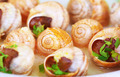 Tasty escargot background - PhotoDune Item for Sale