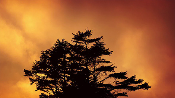 Tree Against Fiery Evening Sky