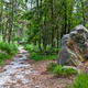 Path in the Forest of Fontainebleau - PhotoDune Item for Sale