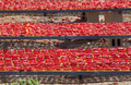 Dried red ripe tomatoes, - PhotoDune Item for Sale