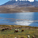 Altiplano - PhotoDune Item for Sale