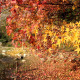 Autumn Leaf - VideoHive Item for Sale