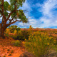 Autumn Tree in the Canyon - Utah Fall Landscape - PhotoDune Item for Sale