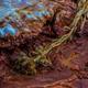 Petrified Plant Crystal Geyser Utah Close-up - PhotoDune Item for Sale