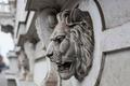 Lion Head - PhotoDune Item for Sale