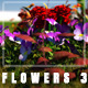 Flowers 3 - VideoHive Item for Sale