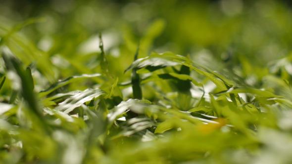VideoHive Grass 9599462