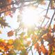 Autumn Foliage  - VideoHive Item for Sale