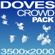 Doves Crowd - VideoHive Item for Sale