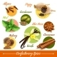 Herbs and Spices Set - GraphicRiver Item for Sale