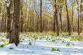 Autumn forest under first snow. Winter landscape. - PhotoDune Item for Sale