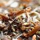 Ant - PhotoDune Item for Sale