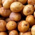 Small potatoes - PhotoDune Item for Sale