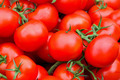 Organic tomato - PhotoDune Item for Sale