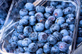 Blueberries - PhotoDune Item for Sale