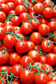 Bunch of tomatoes - PhotoDune Item for Sale