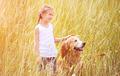 Little girl with golden retriever - PhotoDune Item for Sale
