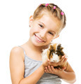 Little girl holding a guinea pig - PhotoDune Item for Sale