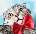 young cat in a red bow tie - PhotoDune Item for Sale